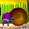 DUNG BEETLE DERBY GAME